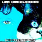 ANIMAL COMMUNICATION COURSE
